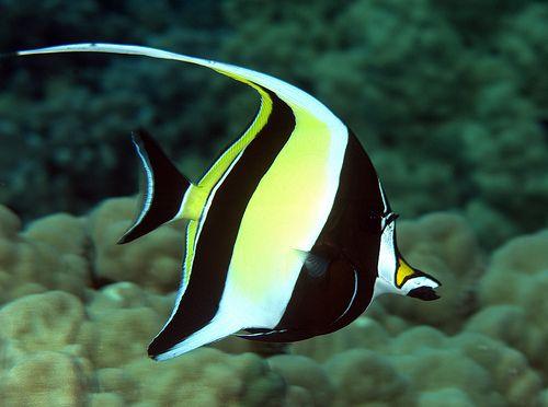 Super Top 12 plus beaux poissons dans le monde WF03