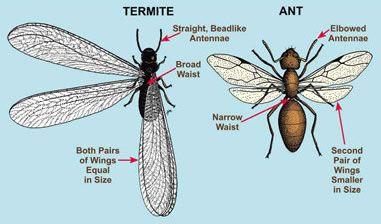 10 fa ons de se d barrasser des fourmis volantes dans la. Black Bedroom Furniture Sets. Home Design Ideas