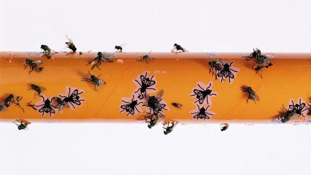 11 accueil recours pour les mouches dans la maison et l - Eliminer les mouches dans la maison ...
